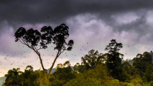 KOSTARIKA Balicek Monteverde Nahled