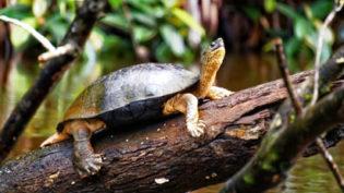 KOSTARIKA Narodní Park Tortuguero Nahled