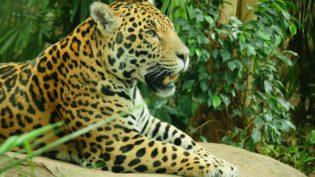 Jaguar 1690865