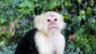Monkey 1249559 1920
